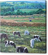 Cows In A Field In The Devon Countryside Canvas Print