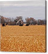 Cows In The Corn Canvas Print