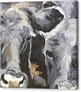 Cows In Waiting Canvas Print