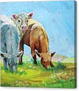 Cows Landscape Canvas Print