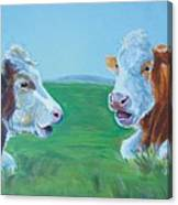 Cows Lying Down Chatting Canvas Print