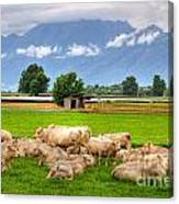 Cows On The Green Field Canvas Print