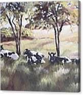Cows Pasture Canvas Print