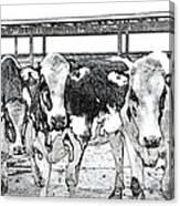 Cows Pencil Sketch Canvas Print