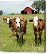 Cows8931 Canvas Print