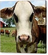 Cows8957 Canvas Print