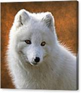Coy Arctic Fox Canvas Print