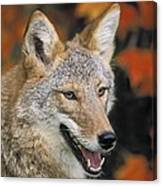 Coyote In Maple Canvas Print