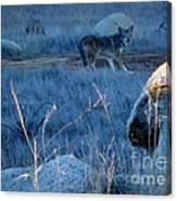 Coyote Wild Canvas Print