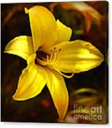Cozy Yellow Daylily Canvas Print