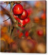 Crab Apple Bright Canvas Print