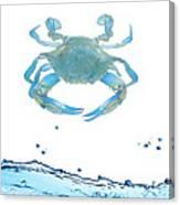 Crab Strolling Around Canvas Print