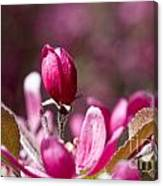 Crabapple Bud Canvas Print