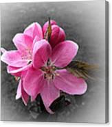 Crabapple Flower Canvas Print