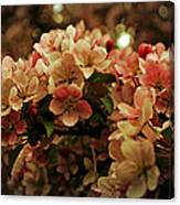 Crabapple In Bloom Canvas Print