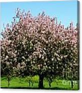 Crabapple Orchard Canvas Print