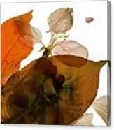 Crabapple Rose I Canvas Print