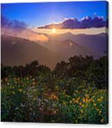 Craggy Gardens Wildflowers  Canvas Print