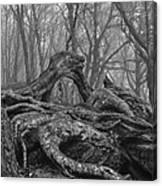 Craggy Roots Canvas Print