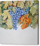 Cran-grapes Canvas Print