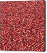 Cranberries Canvas Print