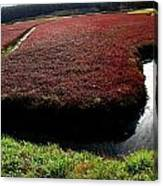 Cranberry Bog Canvas Print