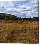 Cranberry Glades Panoramic Canvas Print