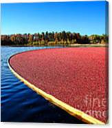 Cranberry Harvest In New Jersey Canvas Print