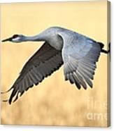 Crane Over Golden Field Canvas Print