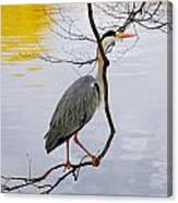 Crane Perching 2 Canvas Print