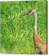 Crane Profile Canvas Print