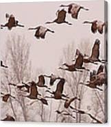 Cranes Across The Sky Canvas Print