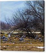Cranes And Mixed Ducks Canvas Print