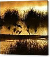 Cranes On Golden Pond Canvas Print