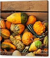 Crate Filled With Pumpkins And Gourts Canvas Print