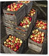 Crated Apples Canvas Print