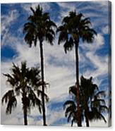 Crazy Cloud Palms Canvas Print