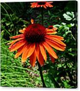 Crazy Daisey Two Canvas Print