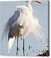 Crazy Egret Feathers Canvas Print