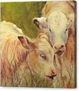 Cream And Sugar, Cows  Canvas Print