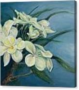 Creamy Plumeria Canvas Print
