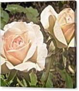 Creamy Roses Canvas Print