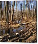 Creek At Woodland Park Canvas Print