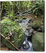 Creek In Mountain Rainforest Costa Rica Canvas Print