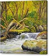 Creek In The Forest Canvas Print