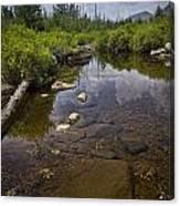 Creek In Vermont Canvas Print