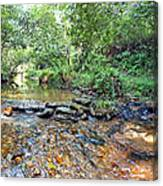 Creekside 2 Canvas Print