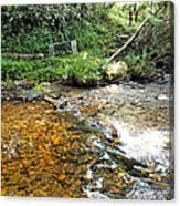 Creekside 4 Canvas Print