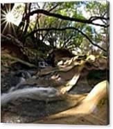 Creekside Sunrise Canvas Print