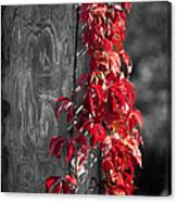Creeper On Pole Desaturated Canvas Print